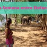 Una Semana entre Elefantes